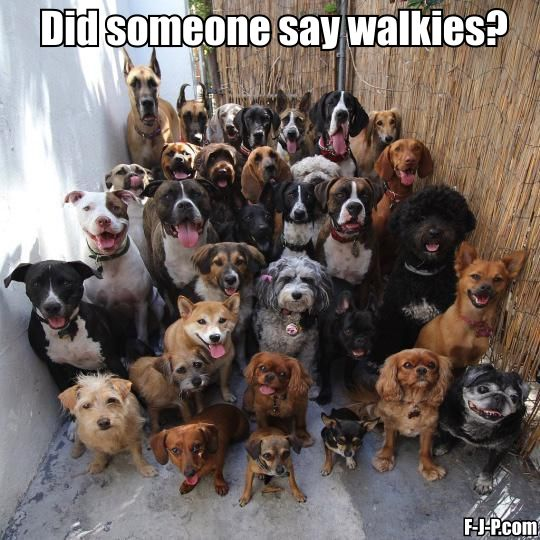 Funny Someone Say Walkies Dog Meme Picture