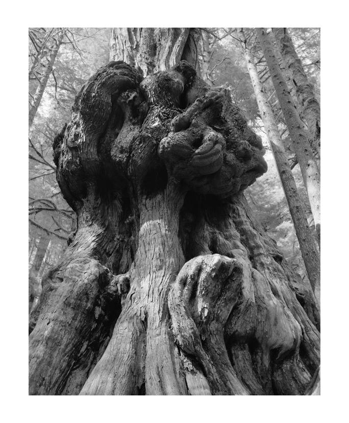 Avatar 2 Hotel: World Visit: Avatar Forest Vancouver Island