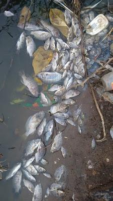 Centenas de peixes mortos são encontrados no açude de Serrolândia