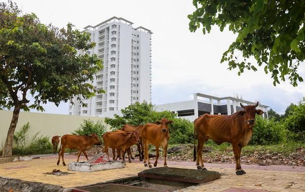 Chăn nuôi phát triển mạnh