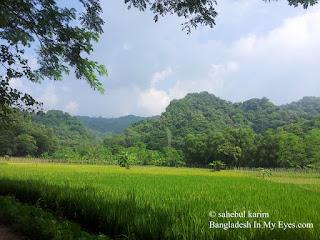 Paddy field Khoiyachora