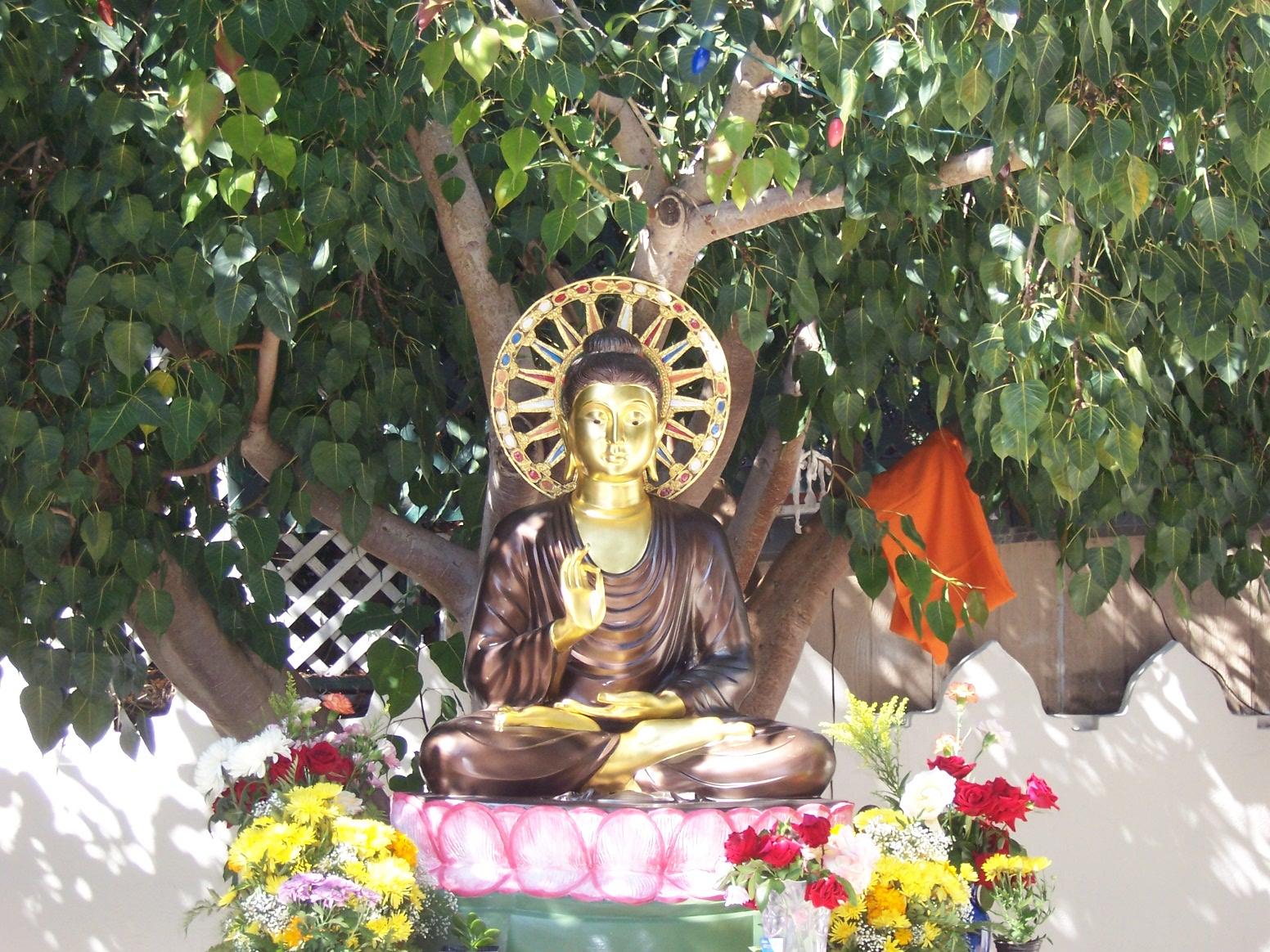 Wisdom Quarterly: American Buddhist Journal: Peace Wins