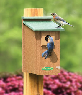 Bluebird House with Green Roof