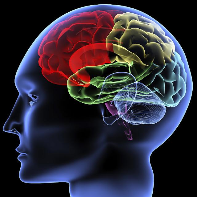 Meski Sudah Dewasa, Otak Kita Masih Dapat Berkembang. Berikut 7 Hal Yang Dapat Mengembangkan Otak!