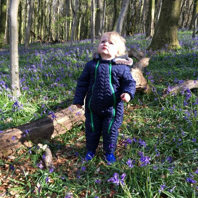 toddler looking up bluebells behind