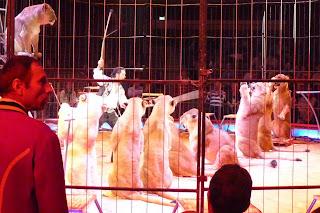 Domador de leones en el Circus Krone.