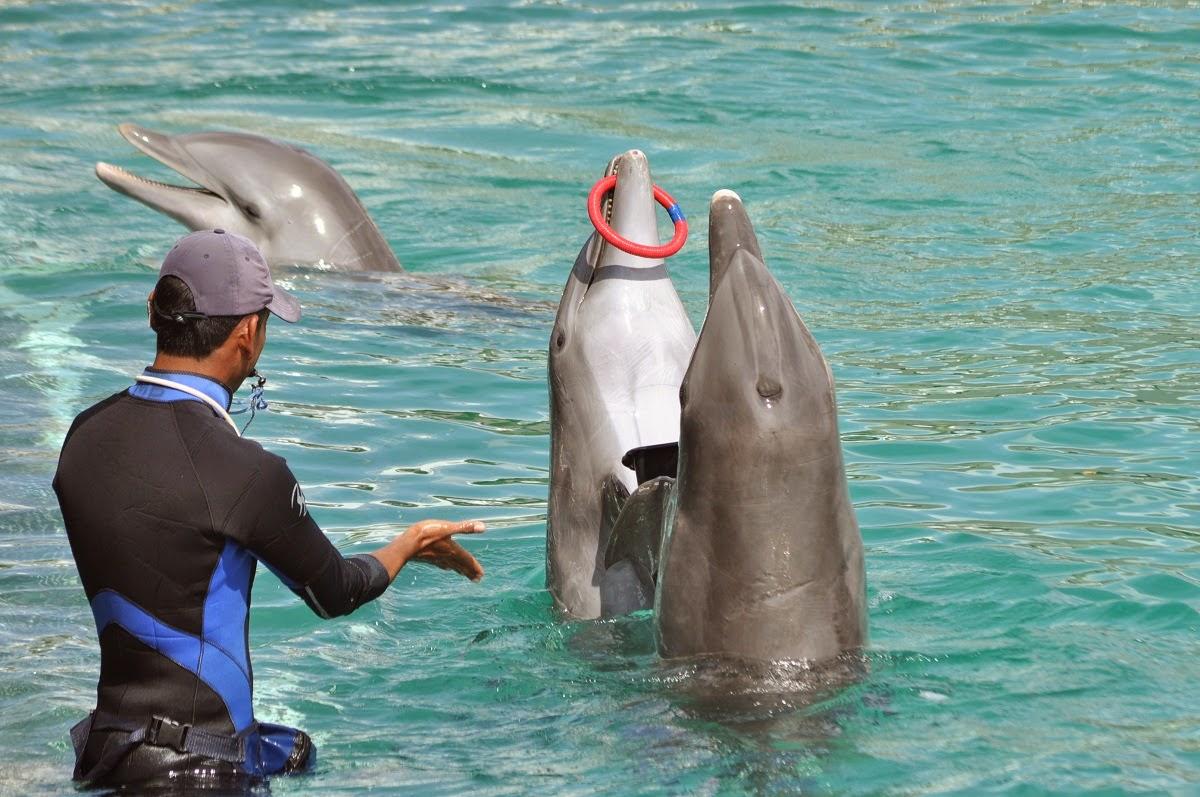 Дельфины-в-Мексике