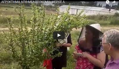 ΑΓΡΟΚΤΗΜΑ ΑΠΘ ΜΕΛΙΣΣΟΚΟΜΙΑ: Συμβουλές απο τον καθηγητή Ανδρέα Θρασυβούλου VIDEO
