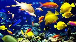 fondali e pesci-02