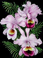 Orquídea png