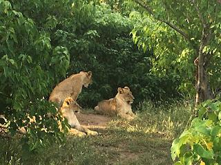 Botswana, Riitta reissaa, ratsastussafari, ratsastusmatka, horsexplore