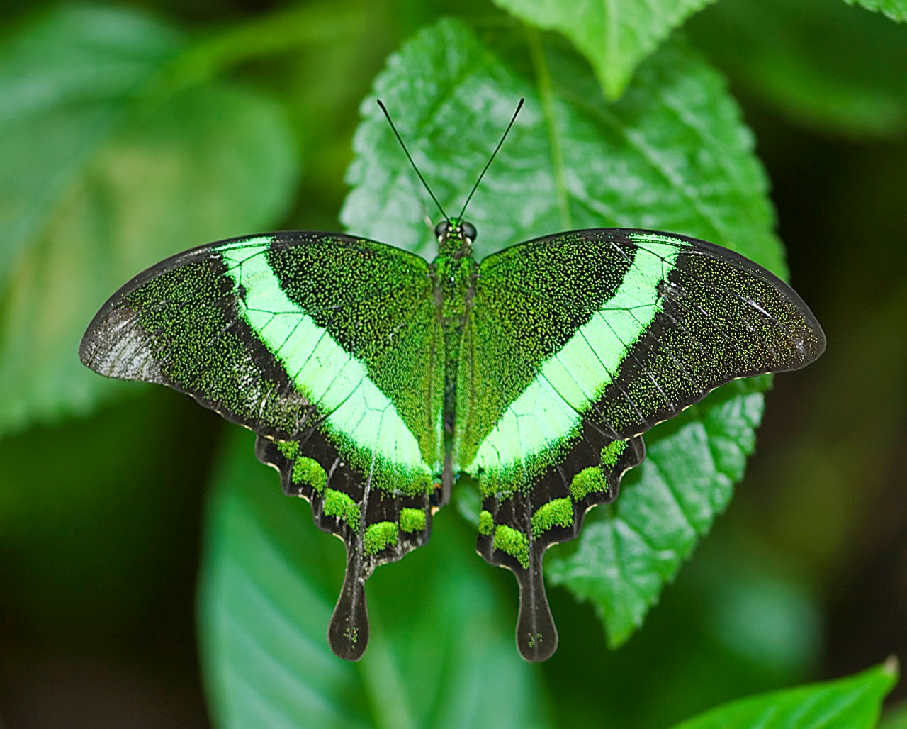 Blok888: Top 10 Most Beautiful Butterflies in the world
