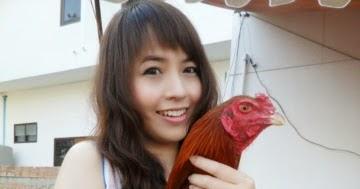 Ayam bangkok jos pukul ko