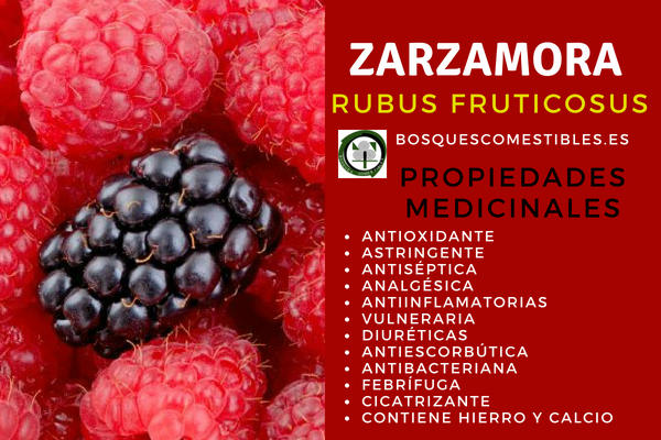 Zarzamora, Rubus fruticosus, Propiedades: Antioxidantes, Astringentes, Antisépticas.