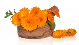 Calendula is one of the female plants, so it is recommended to women in regulating the menstrual cycle and relieves menstrual pains to use the tincture of calendula.