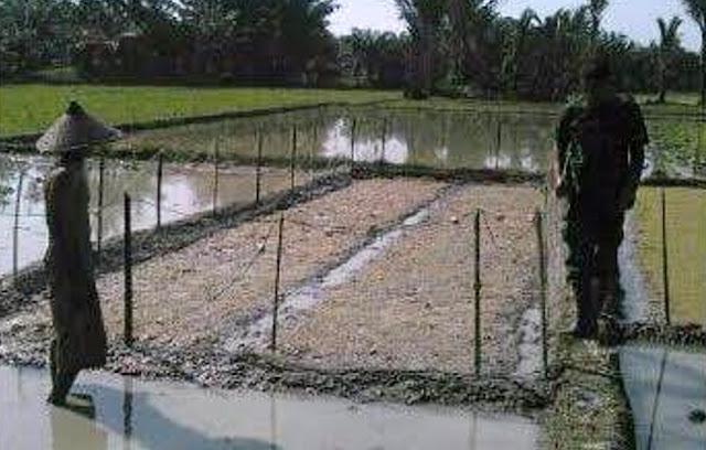 Babinsa Koramil 01 / Medang Deras Dampingi Petani Menyamai Benih Padi di Desa Medang Baru