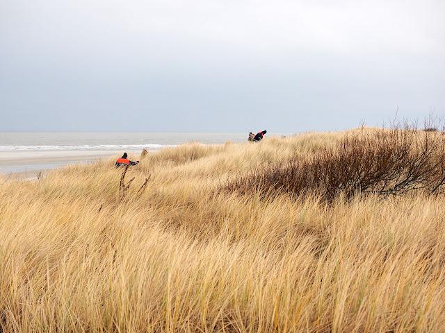 Helmstechen, Langeoog, Küstenschutz, Dünen, Nordsee