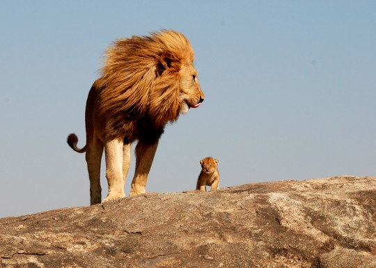 one day simba all of this will be yours