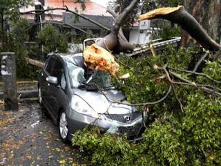 mobil honda tertimpa pohon