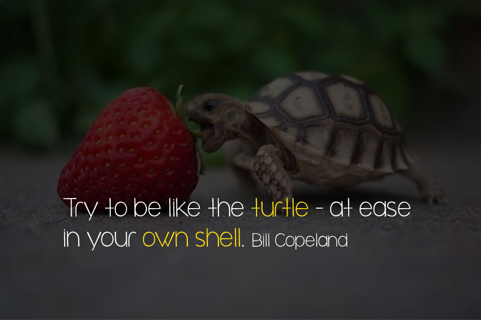 Try to be like the turtle - at ease in your own shell. Bill Copeland