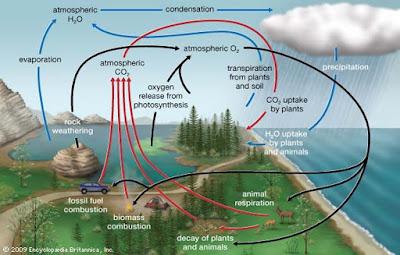 6 Daur Biogeokimia : Proses dan Gambar Ilustrasinya