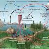 6 Siklus Daur Biogeokimia : Proses dan Contoh Gambar Ilustrasinya