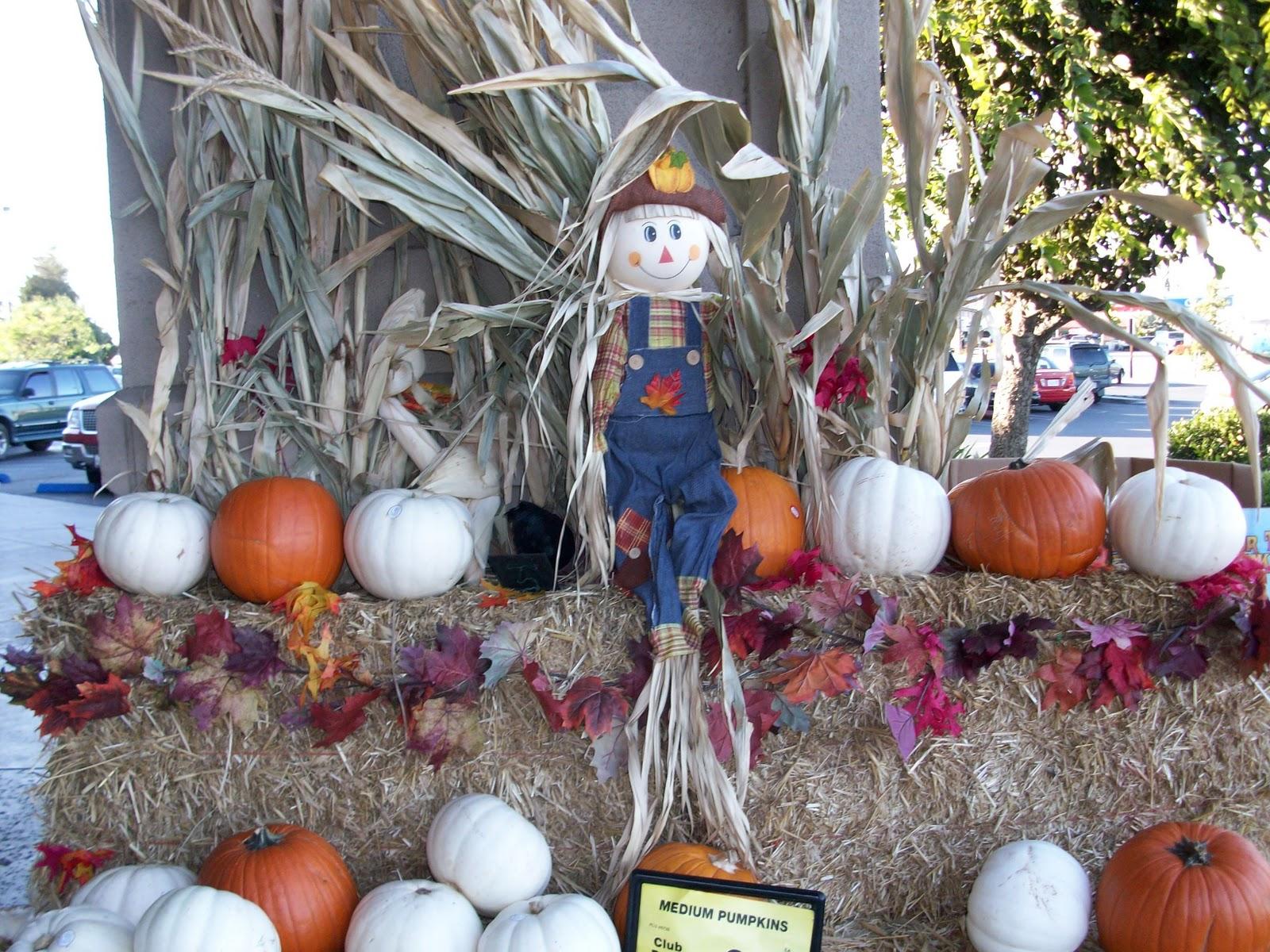 Safeway Halloween Decorations.Whatever I Think Of Pumpkin Displays At Safeway