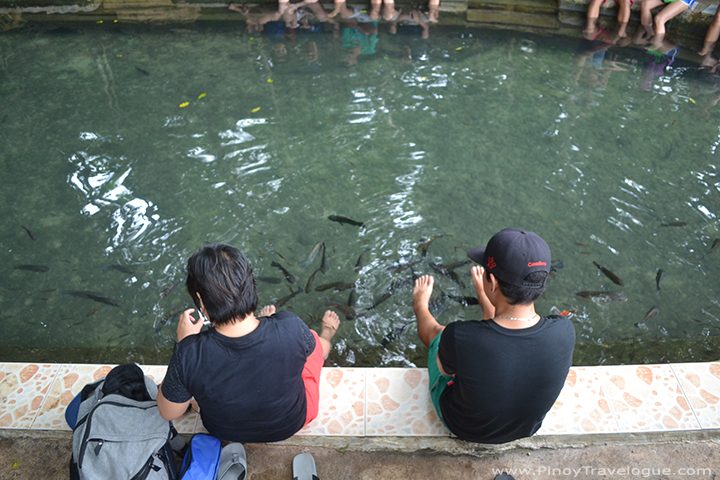 Fish spa under the balete tree