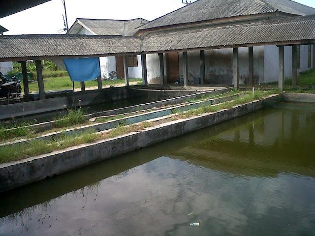Balai Benih Ikan Palas