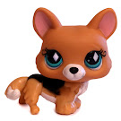 Littlest Pet Shop Large Playset Corgi (#724) Pet