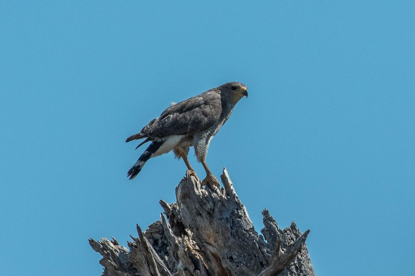 Neovista Birding Arizona Feathers Scales Tails Shells