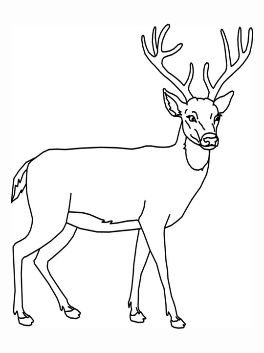 coloring pages and deer - photo#31