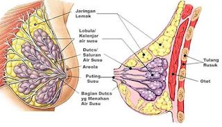 Gambar Obat Kanker Payudara Stadium 1