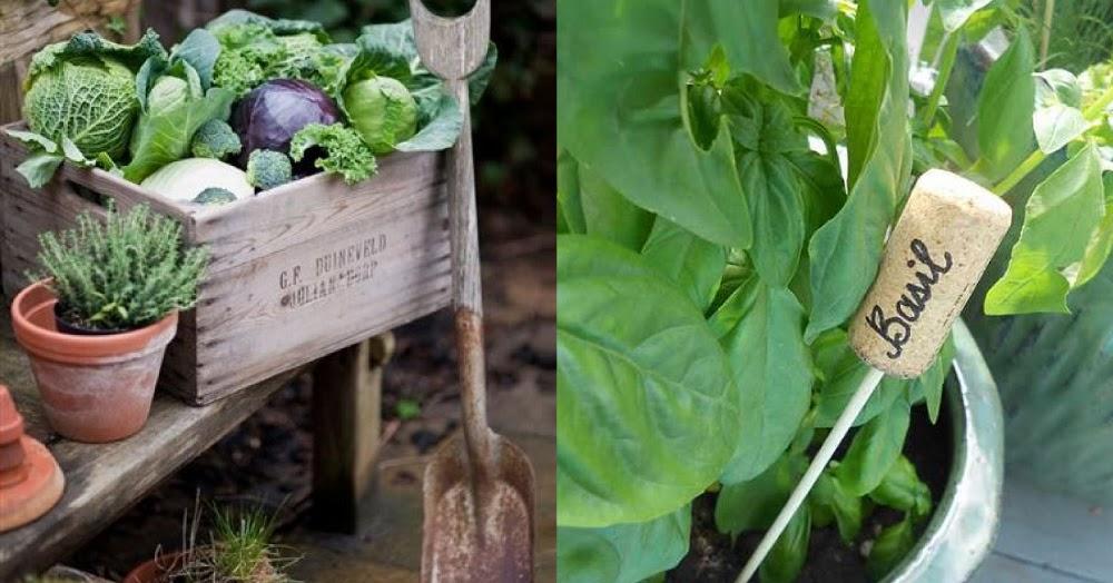 Realizzare un orto domestico blog di arredamento e - Terriccio fertile ...