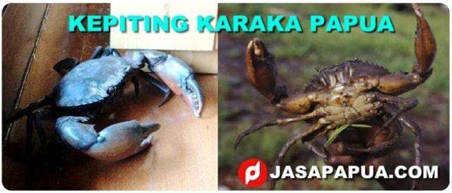 JUAL KEPITING KARAKA PAPUA