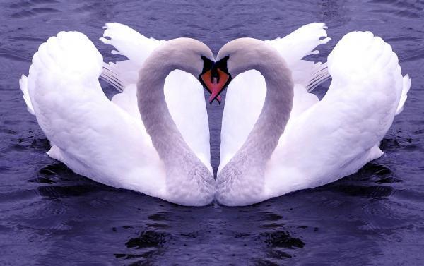 Puisi Selamat Malam Untuk Kekasih Pujaan hati 2016