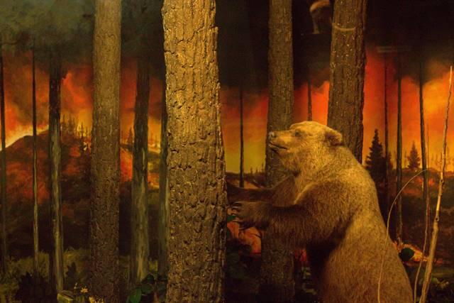 Diorama Kebakaran Hutan Museum Satwa - Hewan Pun Bisa Panik [Jatim Park]