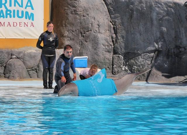 Como cuidar a un delfín varado en la arena