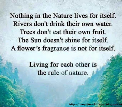 Good Morning Wishes with Lord Buddha and Nature