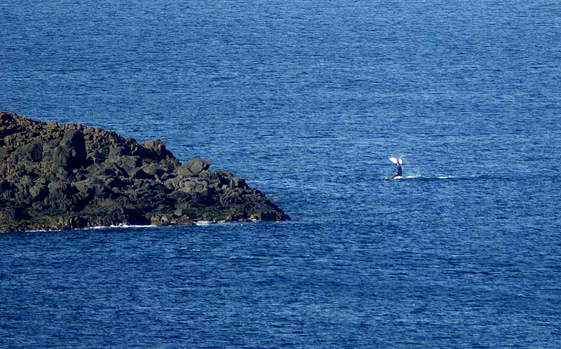 whale watching wollongong - photo#15