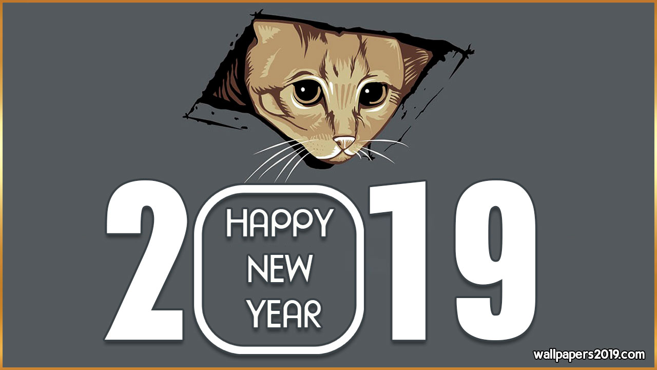cat happy new year 2019