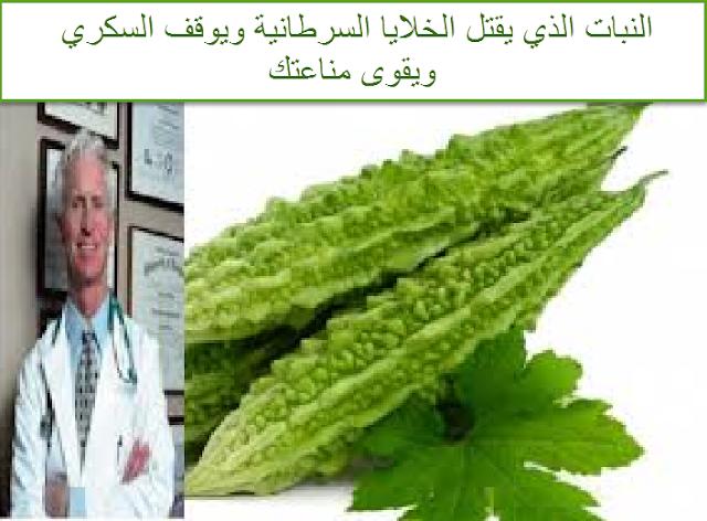 النبات الذي يقتل الخلايا السرطانية ويوقف السكري ويقوى مناعتك!!