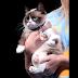 Grumpy Cat, The Internet Pet