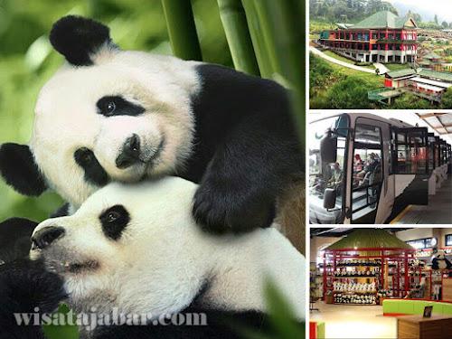 Istana Panda Taman Safari Indonesia