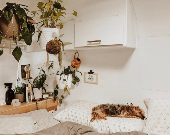 cozy comfortable bed of a vintage airstream with lots of plants in a white bedroom
