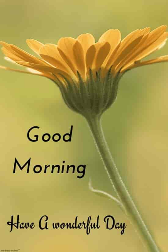 hd good morning image with yellow flower