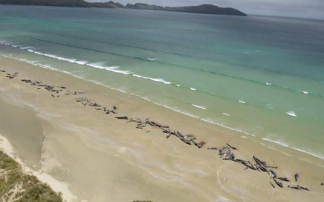 Παραλία Της Νέας Ζηλανδίας Γέμισε Νεκρά Δελφίνια