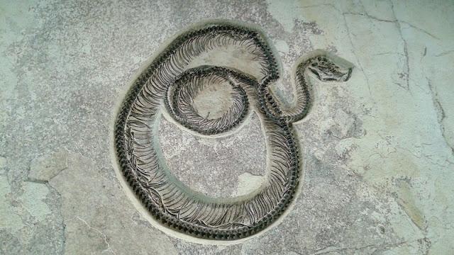 Serpiente fosilizada