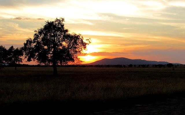 Serengueti español