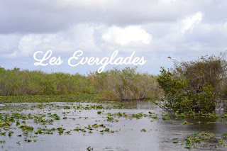 panorama sur le parc national des Everglades